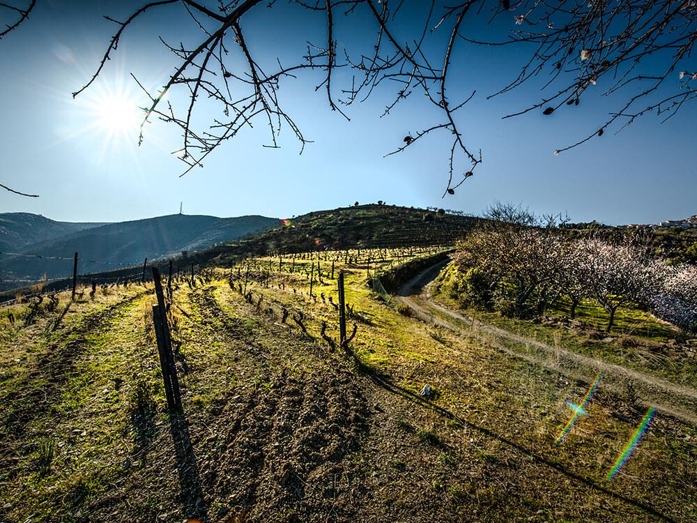 Quinta de Ceis - Vinhos DOP Douro, Vinhos do Porto & Azeites Biológicos